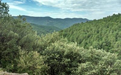 Forêt cévenole : «Nous avons une réelle ressource économique à portée de main»